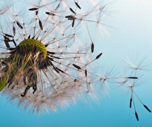 Die Gräserpollen sind im Anflug – meine besten Tipps für Allergiker!